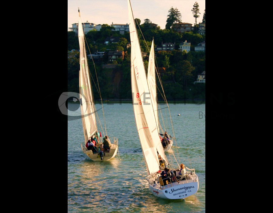 Tiburon CA Sailing on SFO Bay